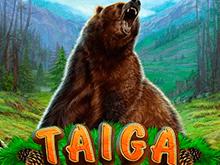 Тайга – игровой автомат от топовых производителей Novomatic